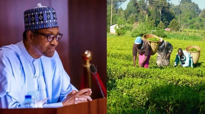 Buhari urges Nigerian youths to engage in Agriculture to boost the economic system
